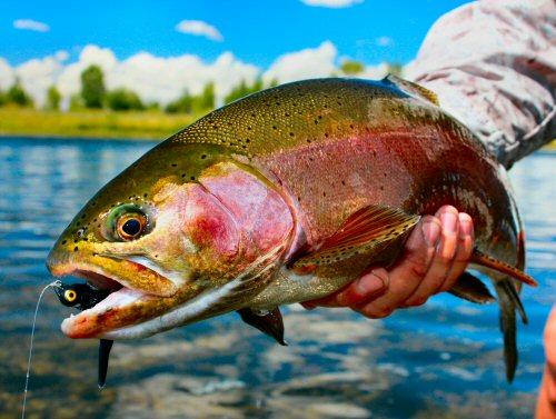 streamer-fishing-1