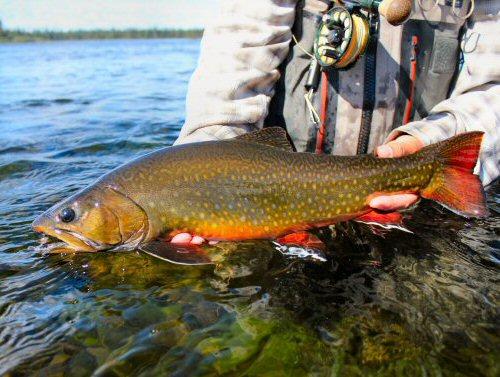 streamer-fishing-5