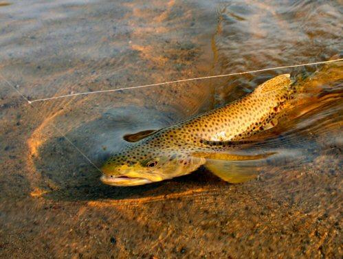 streamer-fishing-8