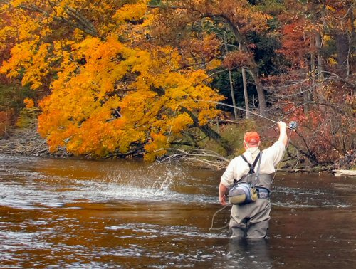 streamer-fishing-9