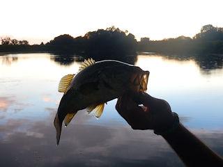 blog-nov-20-2016-10-flyfishing-johannesburg