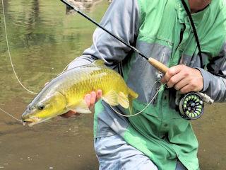 blog-nov-23-2016-4-smallmouth-yellowfish