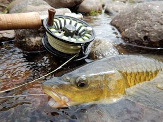 blog-nov-25-26-2016-2-yellowfishing