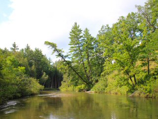 Fly Fishing the Pine River in Michigan – Jeff Currier