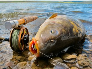 blackfoot reservoir - fly fishing for a 20lb carp - jeff currier, Fly Fishing Bait
