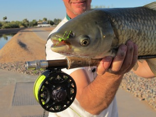 urban arizona asualt of grass carp - jeff currier, Fly Fishing Bait